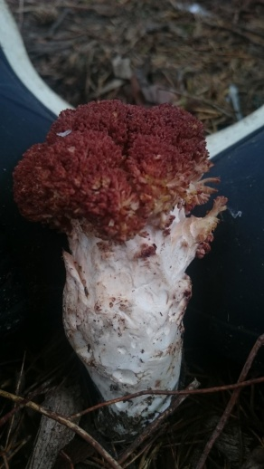 фото гриба