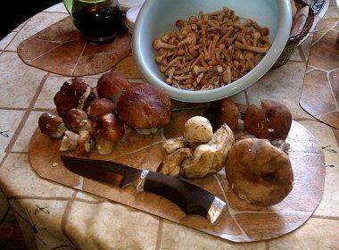 Обработка грибов после сбора