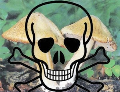 Ошибочные «признаки» ядовитых грибов