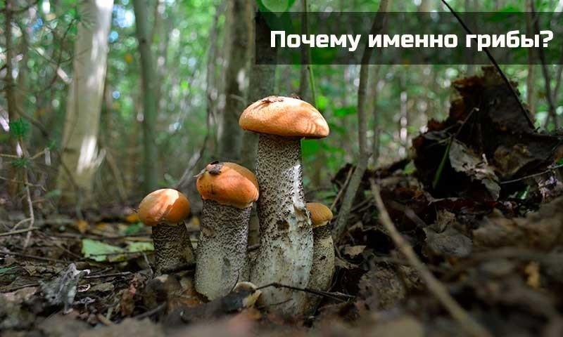 Почему именно грибы?