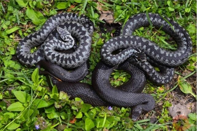 Что делать, если укусила змея?