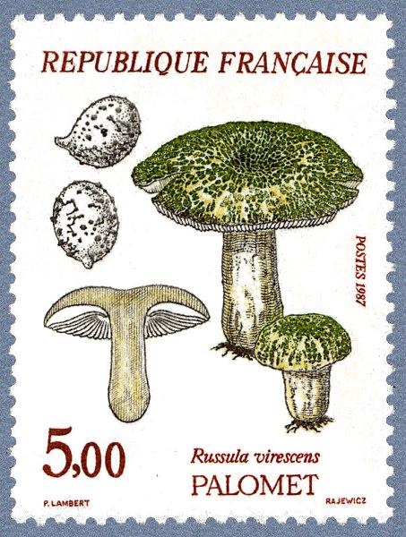 Сыроежка чешуйчатая Russula virescens