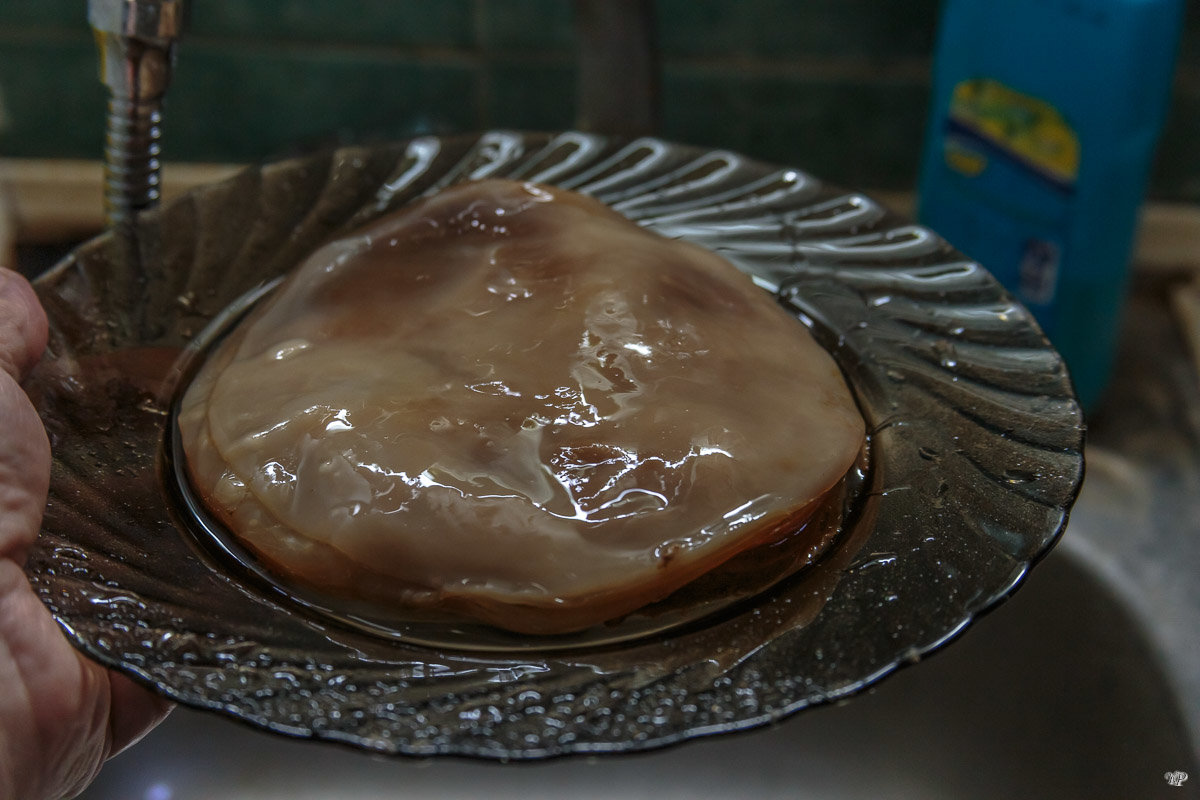 Чайный гриб - kombucha
