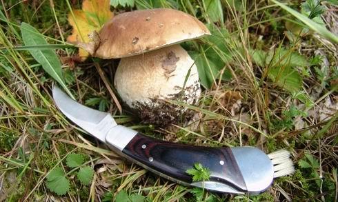 Зачем грибнику нож?