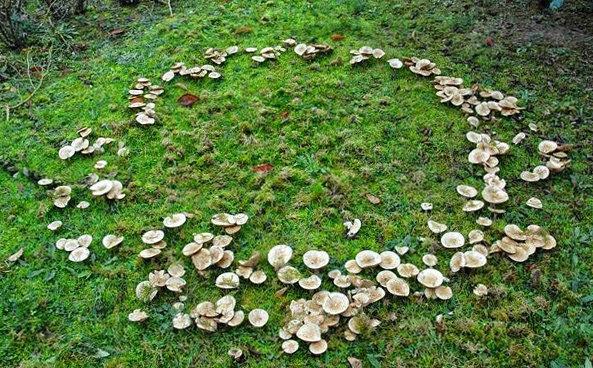 Ведьмины круги