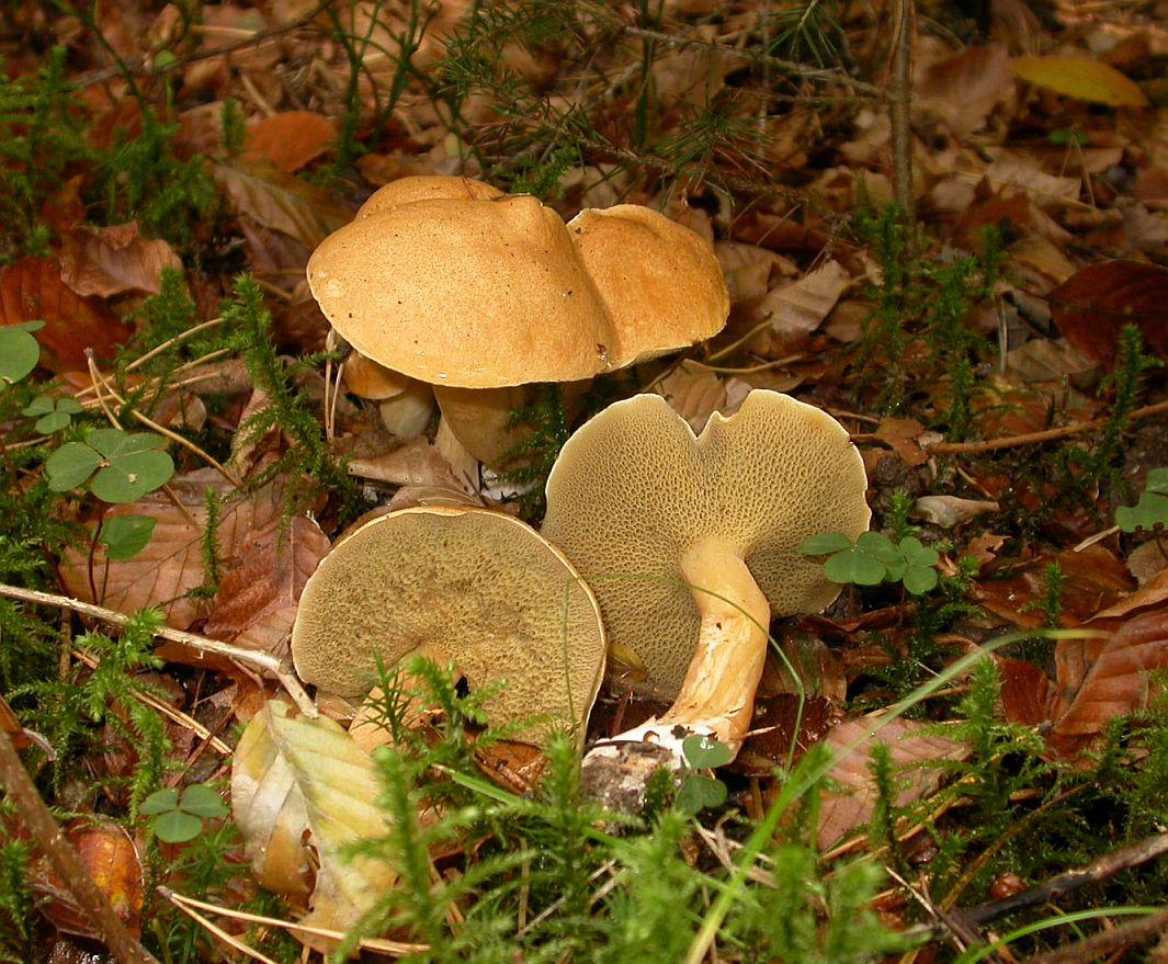 Если грибы при варке поменяли цвет