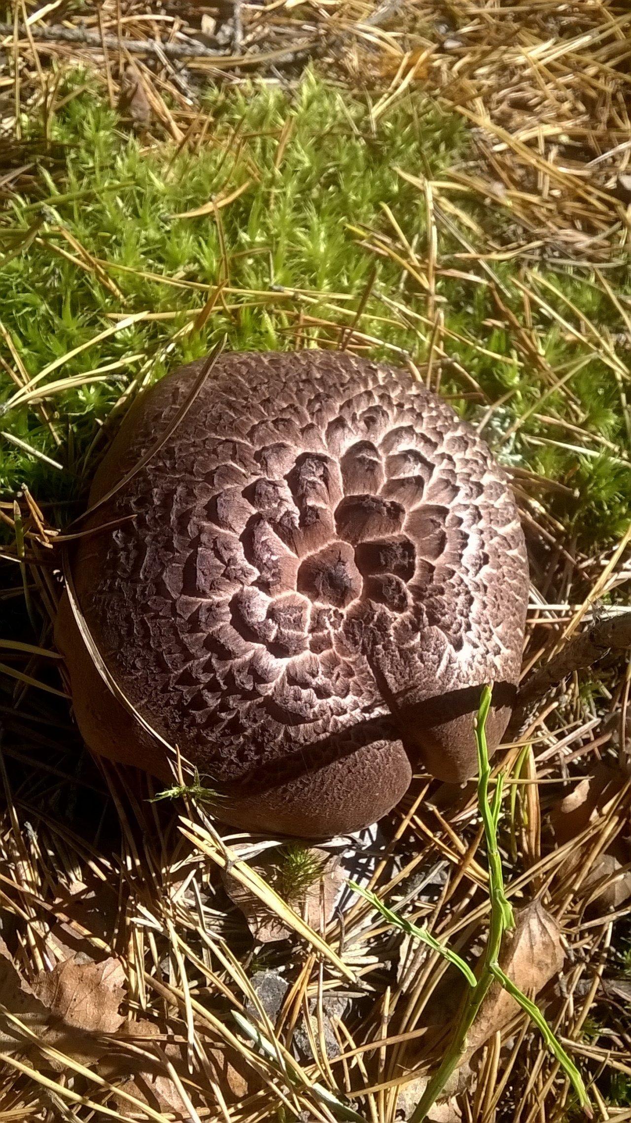 земляной гриб фото представляем вам прогноз