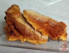 Гапалопилус красноватый (Hapalopilus rutilans)