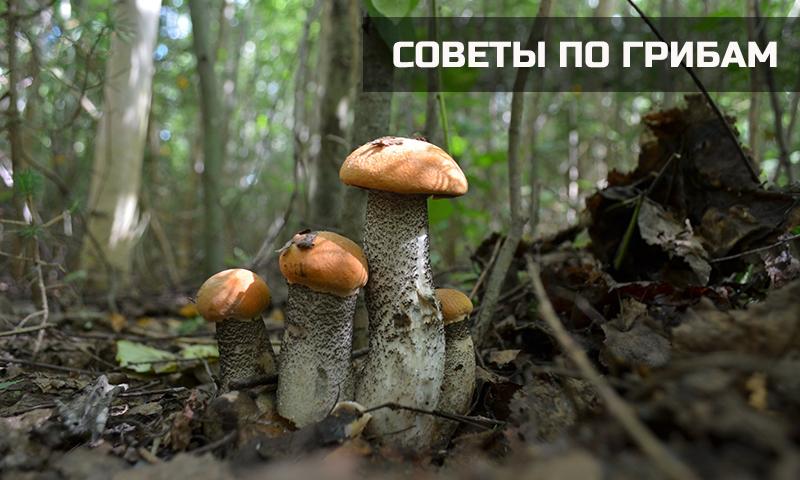 Полезные советы о грибах