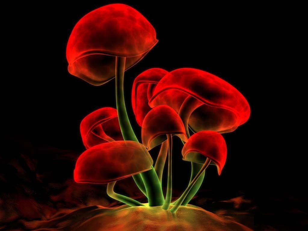 лсд фото грибы