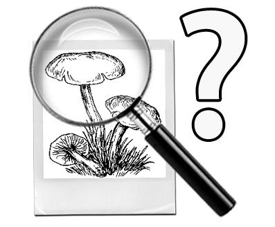 узнать гриб по фото