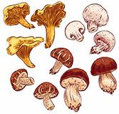 История происхождения грибов
